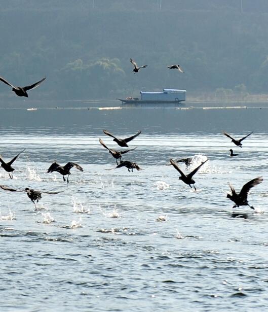 汉丰湖水鸟